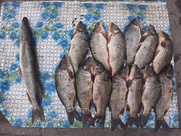Порушник завдав понад 4 тис. грн збитків, - Запорізький рибоохоронний патруль