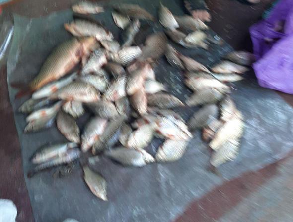 За допомогою сіток правопорушники виловили 23 кг риби,- Запорізький рибоохоронний патруль