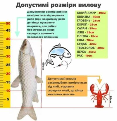 Яку рибу можна, яку потрібно відпускати, а яку і не варто