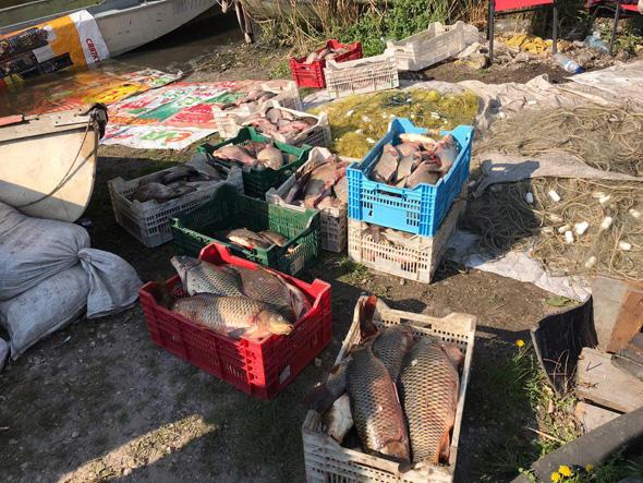 Скандальний улов: Запорізький рибоохоронний патруль зупинив незаконний рибний промисел відомого псевдоактивіста