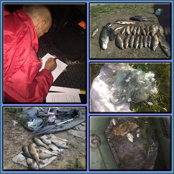Протягом червня вилучено 587 кг незаконно добутої риби,- Запорізький рибоохоронний патруль